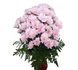 Buchet crizanteme roz